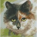 RTO, kit Cat's eyes (RTOM414)
