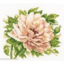 RTO, kit English Rose (RTOM370)
