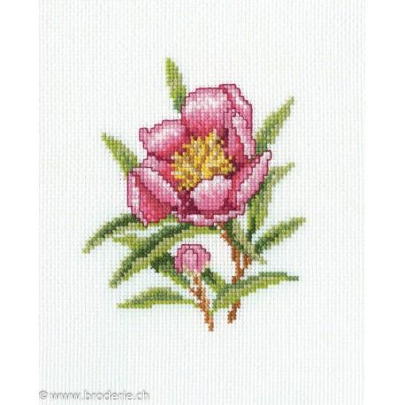RTO, kit Oleander Flower (RTOC183)