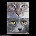 Thea Gouverneur, kit Cats Jack + Luna (G0541)