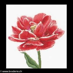 Thea Gouverneur, tulipe double rouge